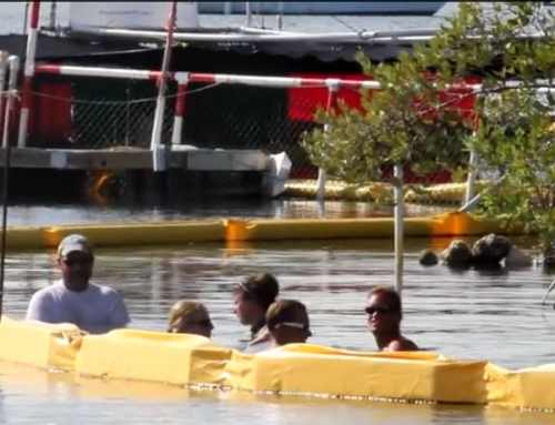 July 30, 2011 – Pilot Whale R300 – 1:13 The Truth – End Her Suffering