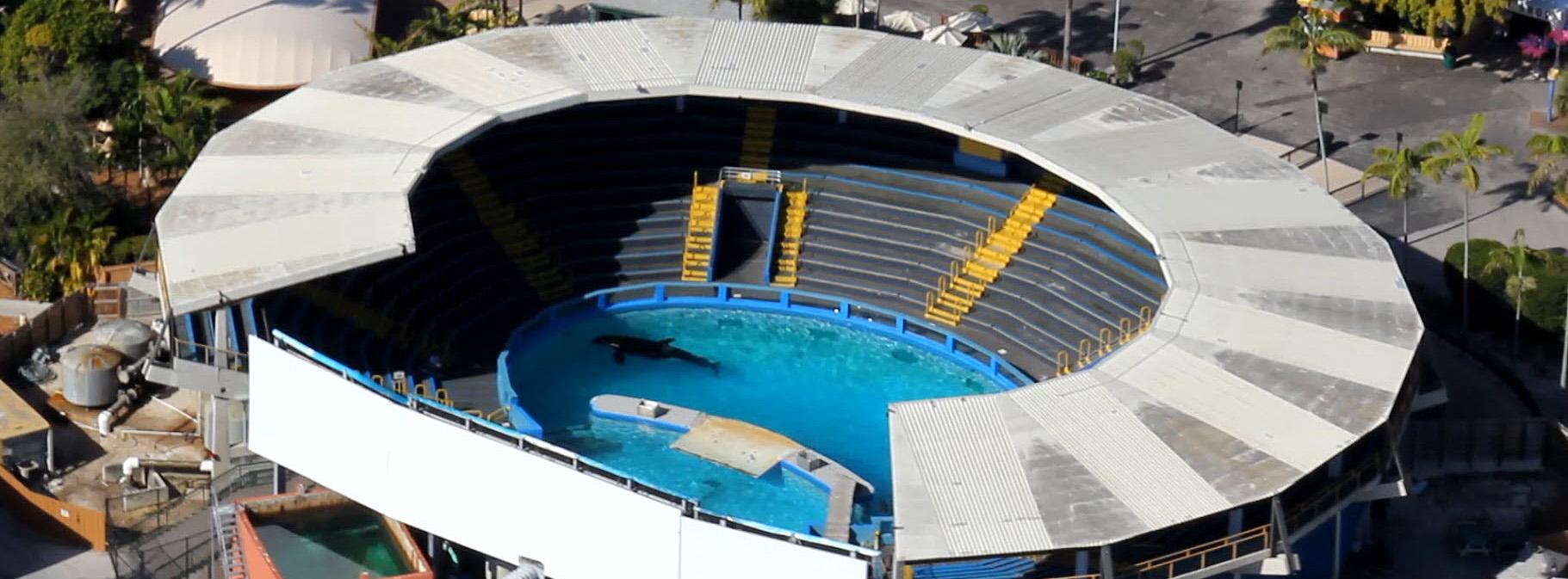 Lolita Tank Miami Seaquarium